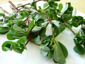 purslane-omega-3