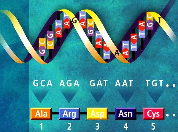 geneticheskaya_inf