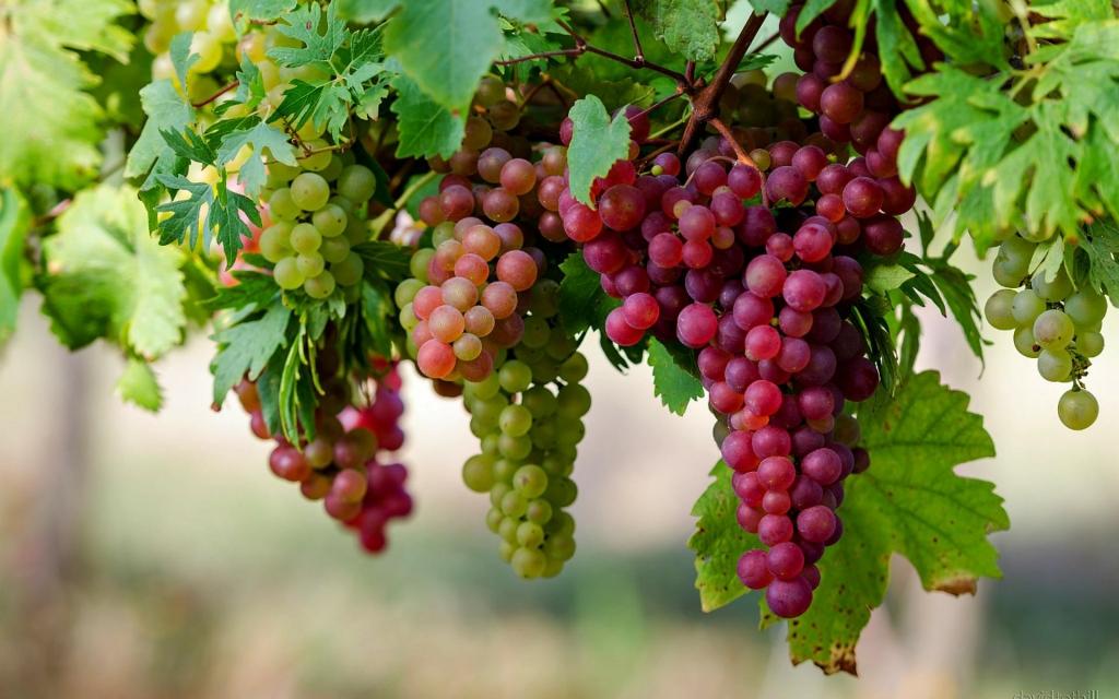 grape-fast-detox